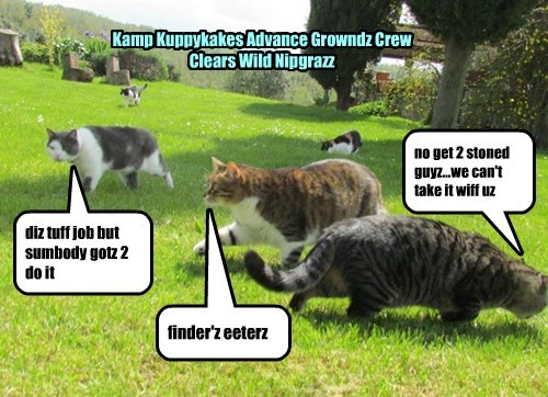 Kamp Kuppykakes Advance Growndz Crew Clears Wild Nipgrazz