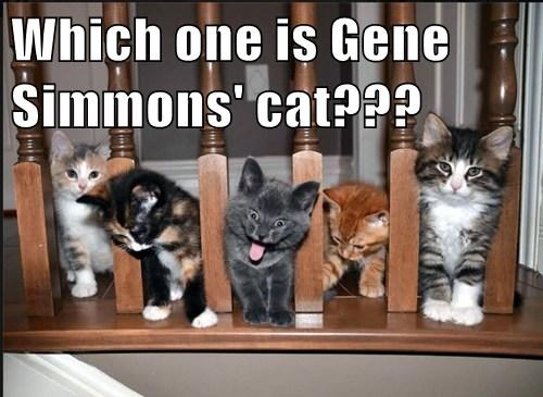 Which one is Gene Simmons' cat???