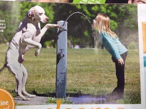 drinking,dogs,water,cute,help