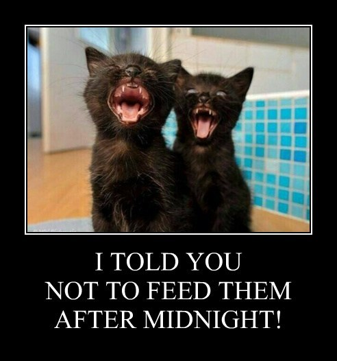 I TOLD YOU NOT TO FEED THEM AFTER MIDNIGHT!