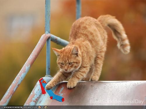 Cats,slide,scared