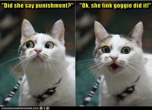 """Did she say punishment?""     ""Ok, she fink goggie did it!"""