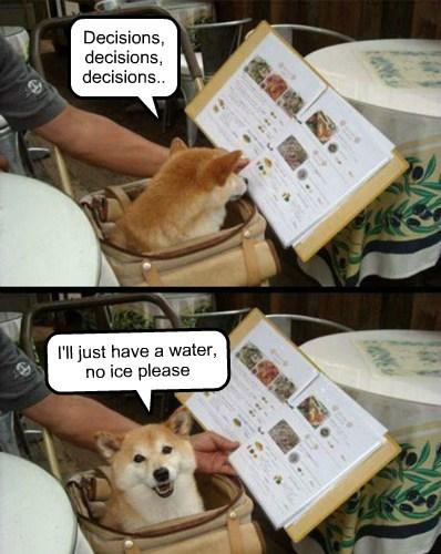 dogs,menu,restaurant