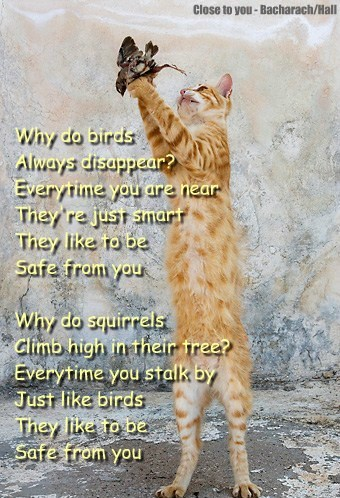 Why do birds  Always disappear? Everytime you are near They're just smart  They like to be Safe from you  Why do squirrels  Climb high in their tree? Everytime you stalk by Just like birds  They like to be  Safe from you