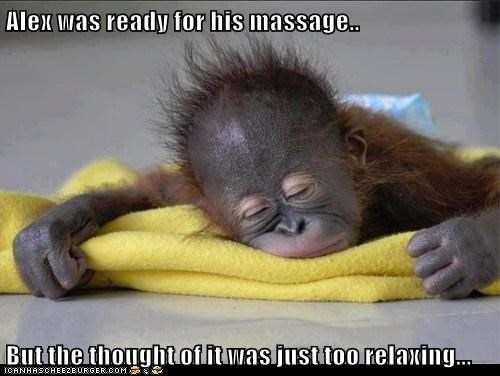 apes,massage,relaxed