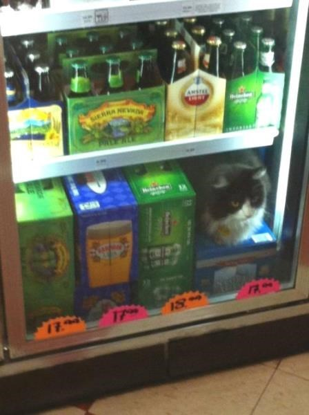 That Cat is 5.7% ABV
