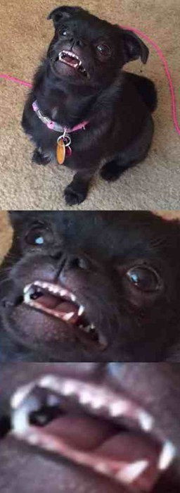 Baby Teeth, I Has Dem