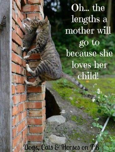 Motherhood is an Upward Climb