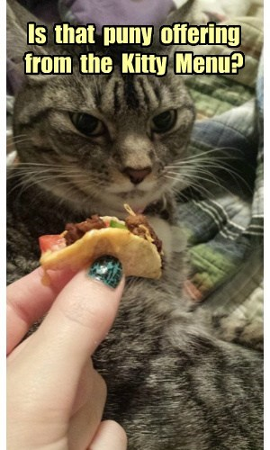 Is  that  puny  offering  from  the  Kitty  Menu?