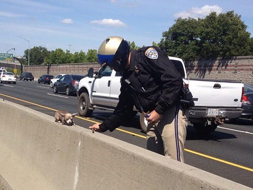 This Patrol Officer Rescued a Chihuahua Stranded on the Highway!