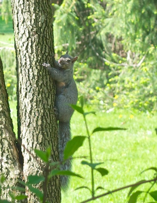 squirrel,Perfect Timing,funny,smile