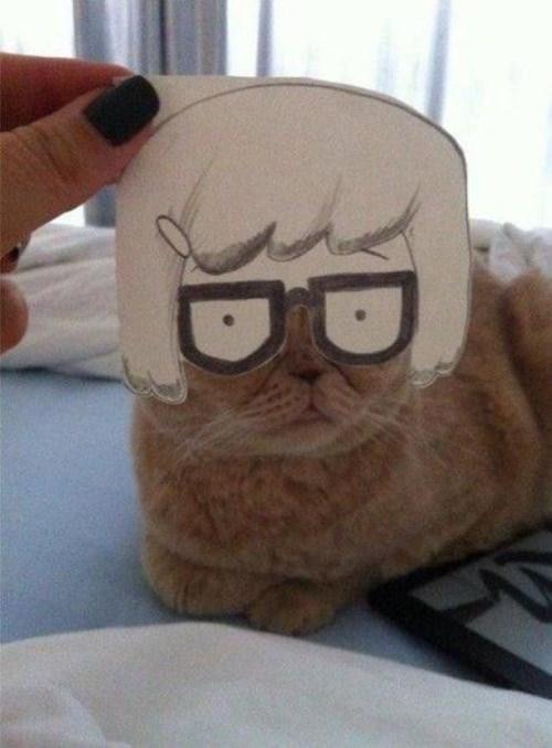 procrastination,masks,Cats,funny