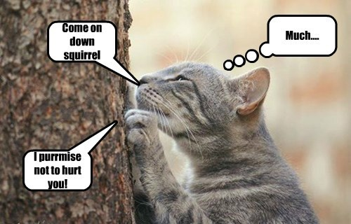 Meowcat wantez lunch
