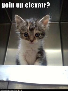 Meowcat1