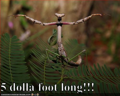 5 dolla foot long!!!