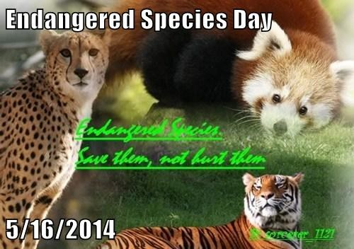 Endangered Species Day  5/16/2014