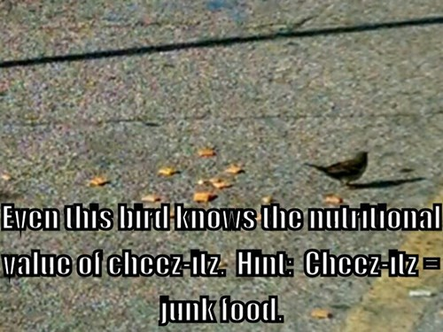 Foodie Bird.
