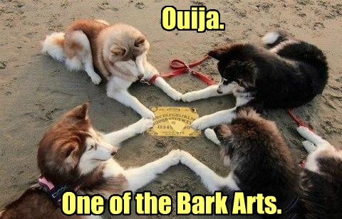 dogs,ouija,puns