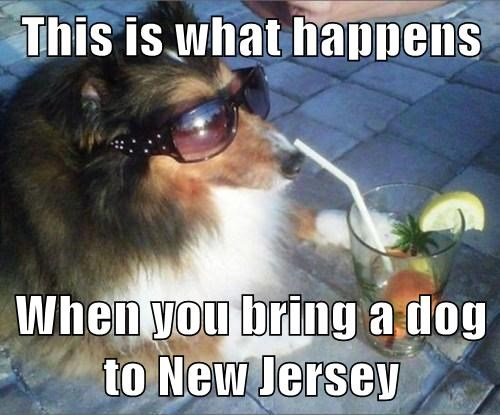 dogs,collie,New Jersey