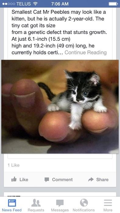 fake,photoshop,Cats