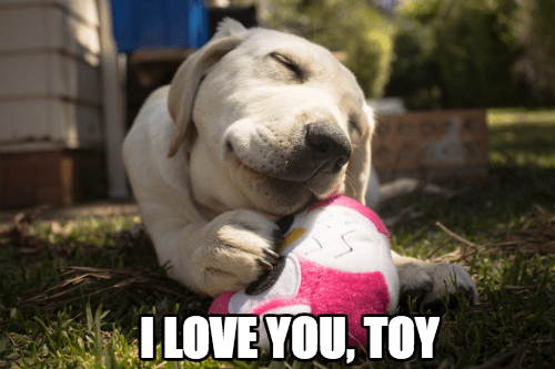 dogs,toys,puppy
