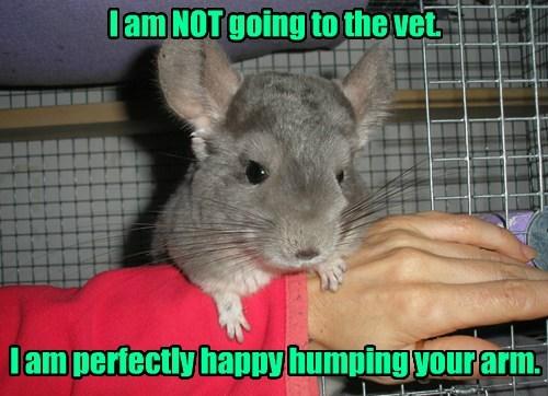 Animal Husbandry gone horribly wrong.