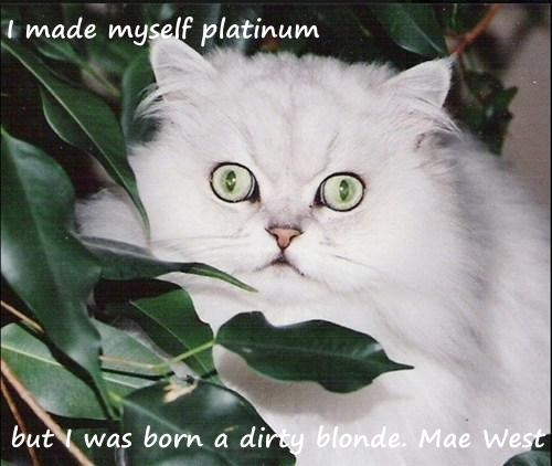 I made myself platinum  but I was born a dirty blonde. Mae West