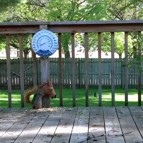 Need a Squirrel Feeder? Use a Horse Mask for Extra Lulz.
