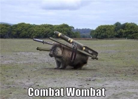 cute,dangerous,funny,Wombat