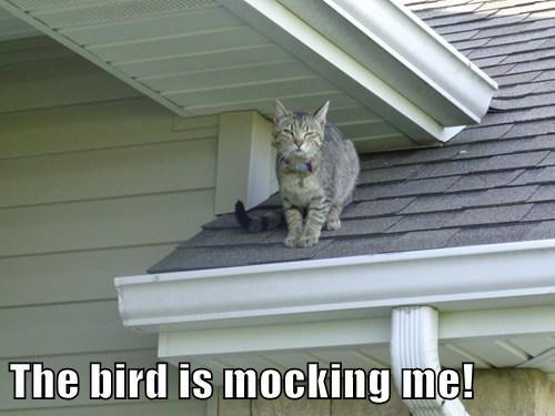 The bird is mocking me!