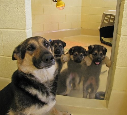 cute,dogs,puppies,moms