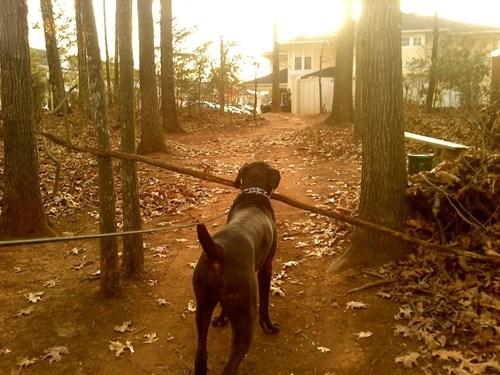dilemma,dogs,fetch,funny,stick