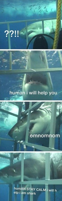 attack,help,funny,sharks