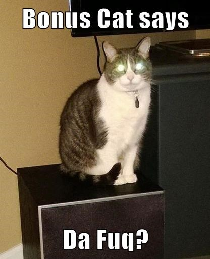 Bonus Cat says  Da Fuq?
