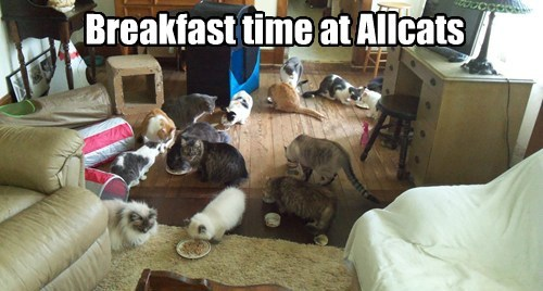 Allcats Kittehs