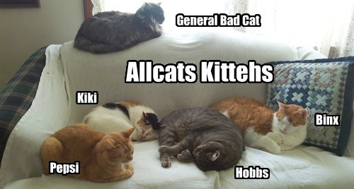 Allcats Kittehs Early a.m. sleepies