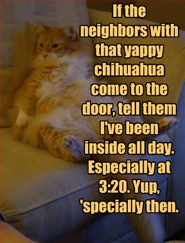 If the neighbors with that yappy chihuahua come to the door, tell them I've been inside all day. Especially at 3:20. Yup, 'specially then.