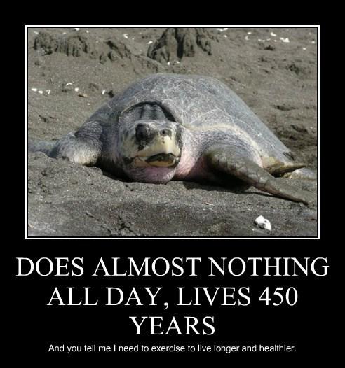 old,diet,turtles,funny