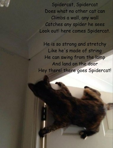 Spidercat, Spidercat Does what no other cat can Climbs a wall, any wall Catches any spider he sees Look out! here comes Spidercat.  He is so strong and stretchy Like he's made of string He can swing from the lamp And land on the door Hey there! there goes