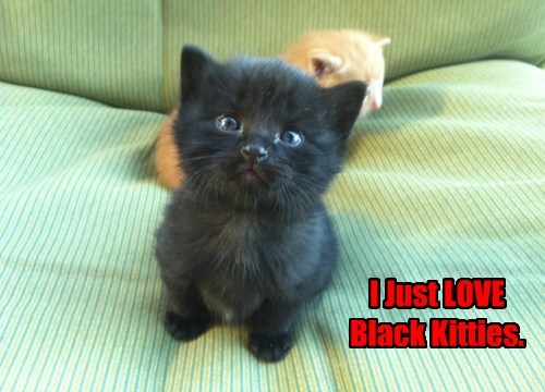 I Just LOVE Black Kitties.