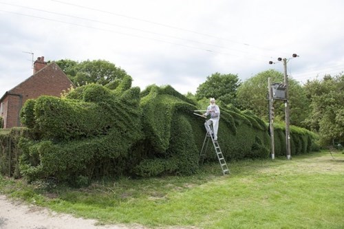 It Took Ten Years, but This Retired English Gent Was Able to Make a 100-Foot-Long Dragon Out of His Hedge