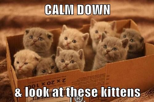 CALM DOWN  & look at these kittens