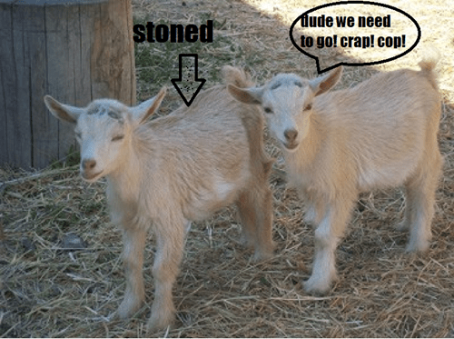 when your friend is stoned in public....