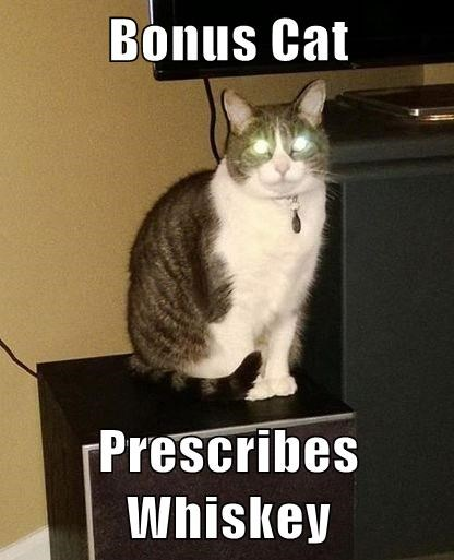 Bonus Cat  Prescribes Whiskey