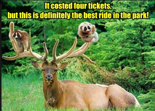 ride,antlers,theme park,deer