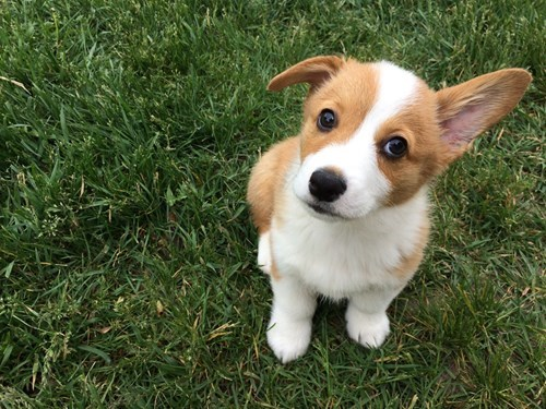 Don't Worry!  I'll Keep an Ear Out!