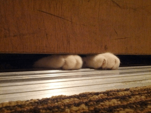 paws,cute,Cats