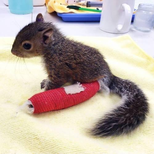 Babies,injury,cute,squirrels