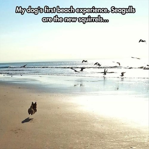 beach,chase,dogs,seagull,squirrel