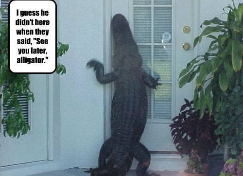 "I guess he didn't here when they said, ""See you later, alligator."""